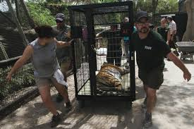 Texas Zoo Evacuates Big Cats W Video Hurricane Central Victoriaadvocate Com