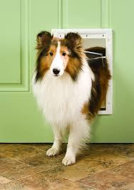 Petsafe Plastic Pet Door Plastic Dog Door Cat Door