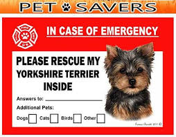 Yorkshire Terrier Yorkie Dog Emergency Window Cling Doggy Style Gifts