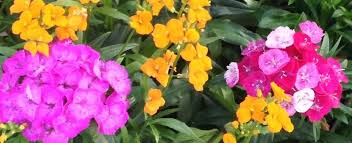 Image result for plant sale