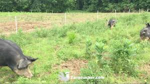 The 4 Best Electric Fence Posts In 2020 Farmhacker Com