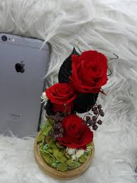 الورد الطبيعي A Twitter ورد طبيعي دائم يعيش لأكثر من ثلاث