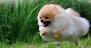 cutest dog breeds k9 research lab