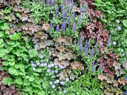 How To Create A Living Wall Bbc Gardeners World Magazine