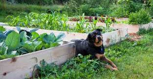 organic gardening mother earth news