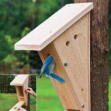 Eastern Bluebird Nest Box State Of Tennessee Wildlife Resources Agency