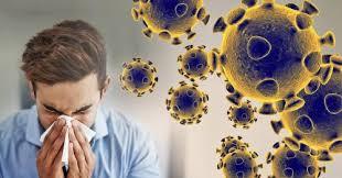 coronavirus : वटवाघुळातून कोरोना व्हायरस ...