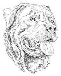 Rottweiler Dieren Tekenen Hond Tekeningen Dier Schetsen