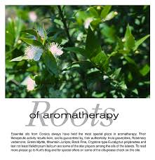 The original Green Myrtle essential oil from Corsica
