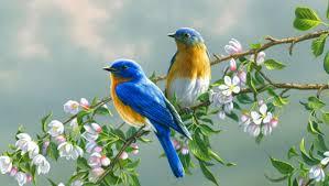 صور عصافير اجمل صور وخلفيات عصافير الاصدقاء للاصدقاء