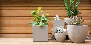 7 Best Pot Plants For Your Garden Home Bunnings Warehouse