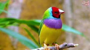 خلفيات ألوان الطيور المريحة Birds Have Beautiful Colors Hd