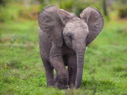 baby elephant wallpapers hd desktop