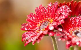 30 beautiful flower wallpaper for you