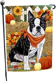 fall autumn greeting boston terrier dog