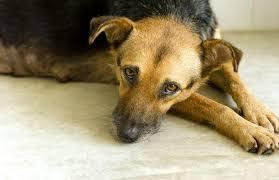 dog licking carpet behavior 3 reasons