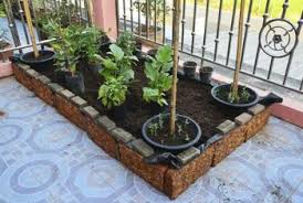 vegetables in containers or raised beds