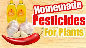 homemade pesticides for plants you