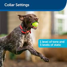 Petsafe Stubborn Dog Stay Play Wireless Fence Rechargeable Receiver Collar Petsuppliesplus Com