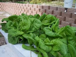 build your own home hydroponic systems