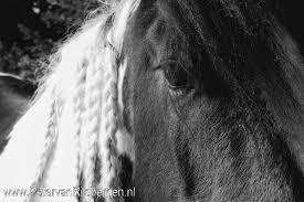 Koudbloed Archieven Paarden Oppas Service