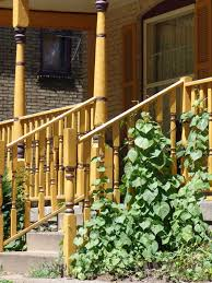Balcony Railing Support For Plants Can You Grow Vines On A Handrail