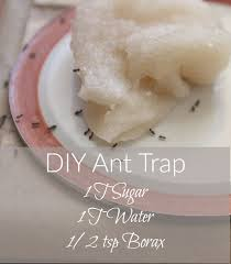 diy ant trap and pesticide powder it