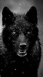 iphone 6 wallpapers black wolf wolf