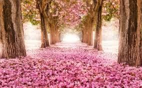 2691 pink flower hd wallpapers