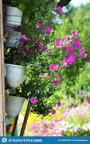Outdoor Flower Pot Hanging On Wooden Fence For Small Garden Patio Or Terrace Stock Photo Image Of Idyllic Gravel 152812872