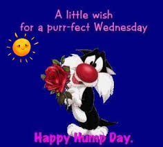 happy hump day 💕☺️🌹 funny good morning images