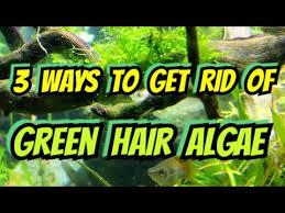 green hair algae how to get rid of it