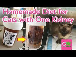 cat with kidney failure