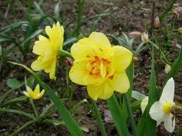 กระบวนการทำซ้ำในพืชดอก พืชดอก: คำอธิบายโครงสร้างการทำสำเนา การใช้ ...