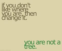 u are not a tree kata kata motivasi motivasi kata kata mutiara