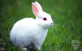 صور رمزيات حيوانات قطط كلاب ارانب كيوت خلفيات حيوانات جميلة