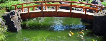 diy build a natural fish pond in your