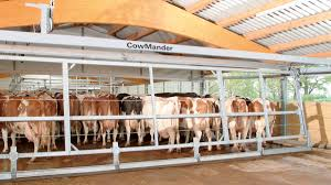 Cow Crowd Gate Cowmander