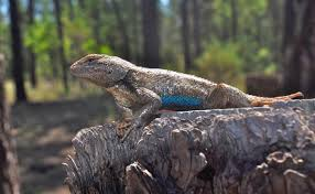 Global Warming Lethal To Baby Lizards Nests Become Heat Traps
