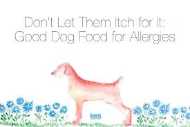 dog food for allergies