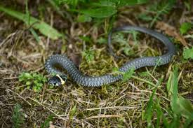 Home Remedies To Keep Snakes Away Snake Control And Prevention