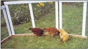Martha S Light Weight Portable Fence Panels Are Inexpensive To Build And Easy To Rearrange Pet Chickens Backyard Poultry Magazine Backyard Poultry