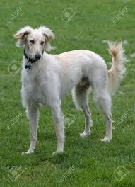 Oldest Breeds Of Domesticated Dog ...