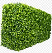 Hedge Green Wall Box Garden Png 2953x2980px Hedge Box Door Evergreen Fence Download Free