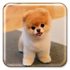 puppy live wallpaper apk from