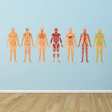 Ced540 Full Color Wall Decal Sticker Man Anatomy Human Biology