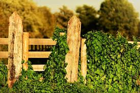 Fence Care For Your Houston Residential Fencing Summit Fence North
