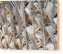 Palm Frond Fence 2 Wood Print By Ron Kandt
