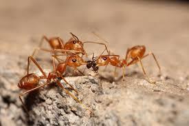 Download Ant Exterminator  Images