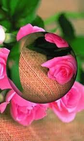 3d rose live wallpaper on wallpapersafari